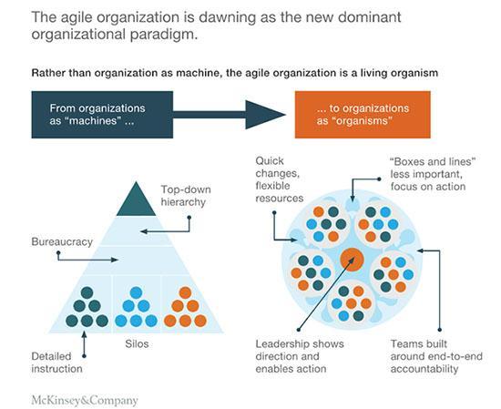 Las 5 claves de McKinsey para definir a una organización ágil